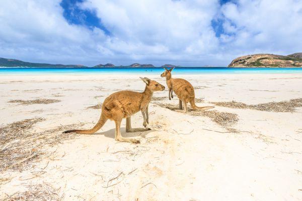 Le 10 esperienze da provare in Australia
