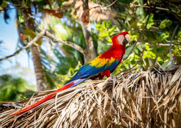 natura Costa Rica